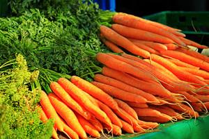 cultivar zanahoria, plantar zanahoria