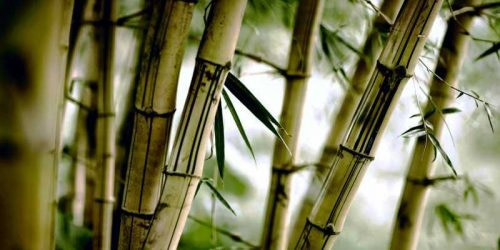 Tienda de plantas de bambú