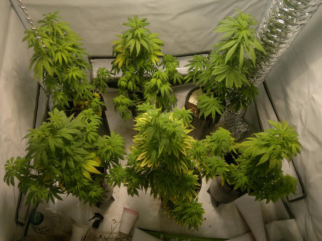 Cómo elegir la Sala de Cultivo de Marihuana