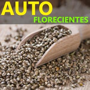Tienda Growshop de semillas Autoflorecientes - Semillas Auto de marihuana - Catálogo 2021