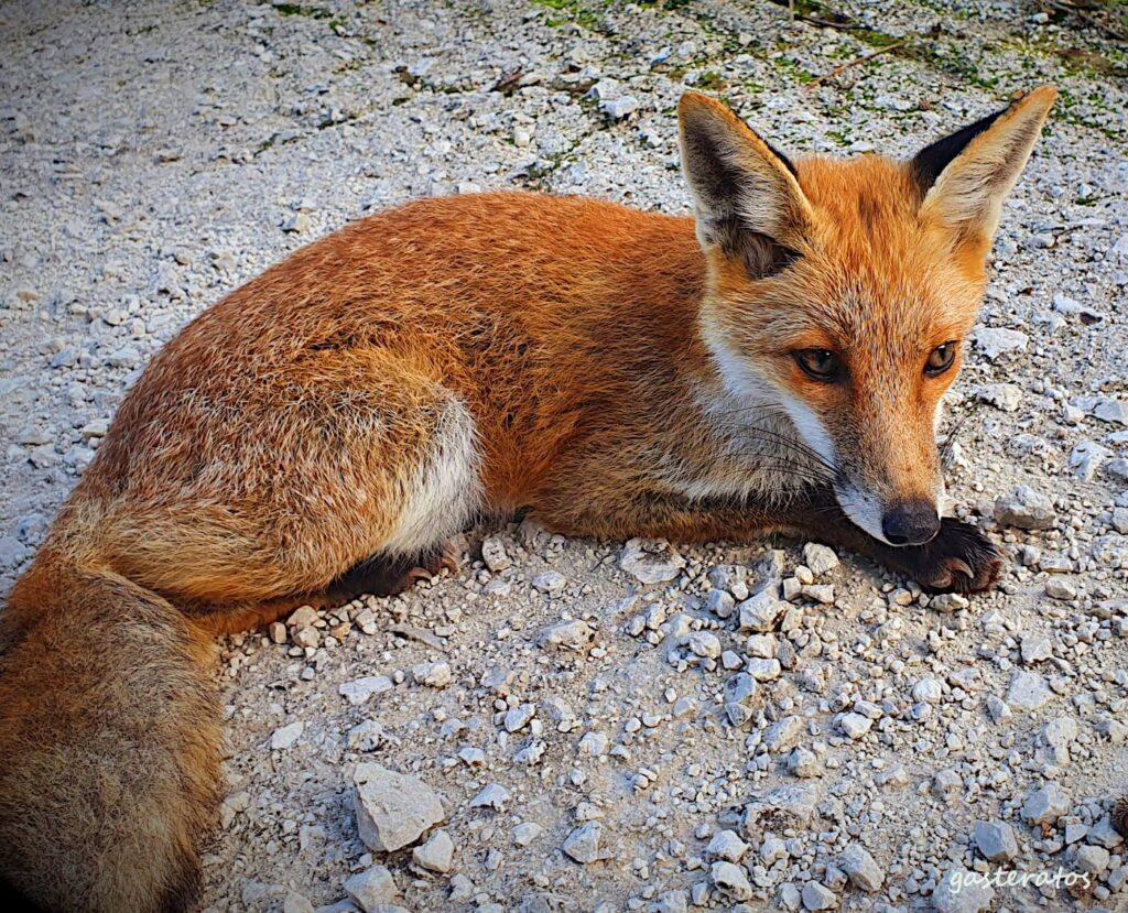 Leyendo a Gerald Durrell: Fauna y flora en la isla de Corfú